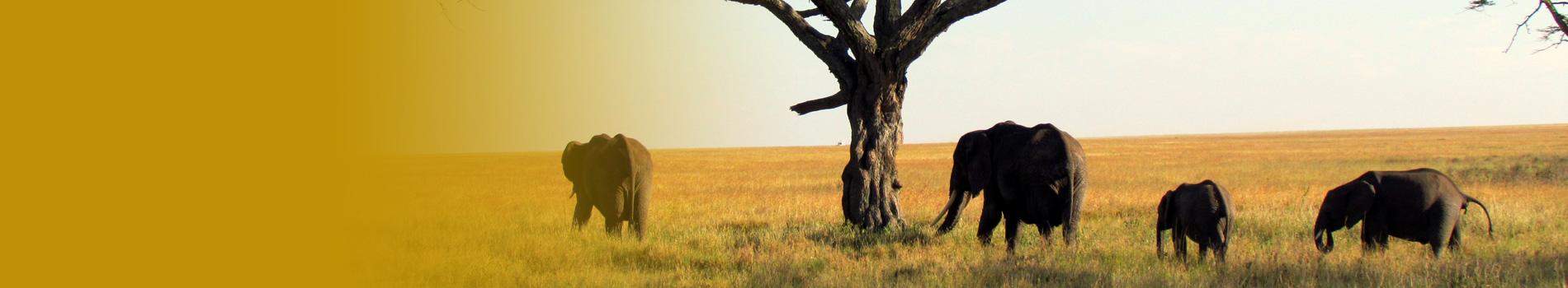header cabecera africa leoproex
